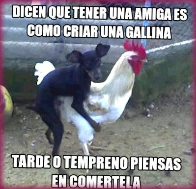 Imágenes-Chistosas-De-Animales-groseros.jpg (399×386)