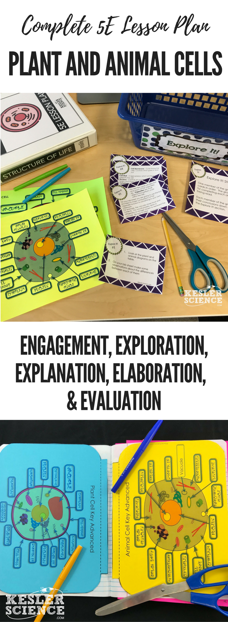 Plant And Animal Cells 5e Lesson Plan Science Experiments Pin Related Pictures Cell Diagram Using Free Printable Venn On Ready To Print Teach The Entire Biology Unit Includes Word Wall Of Vocabulary Interactive Notebook
