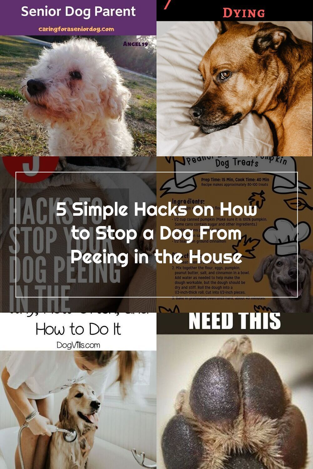 Stop Dog Peeing In The House With Theses Easy Dog Training Tips To Help Potty Train Or House Train Any Dog Or Puppy Gooddoggies In 2020 Dog Pee Dog Parents Dog Care