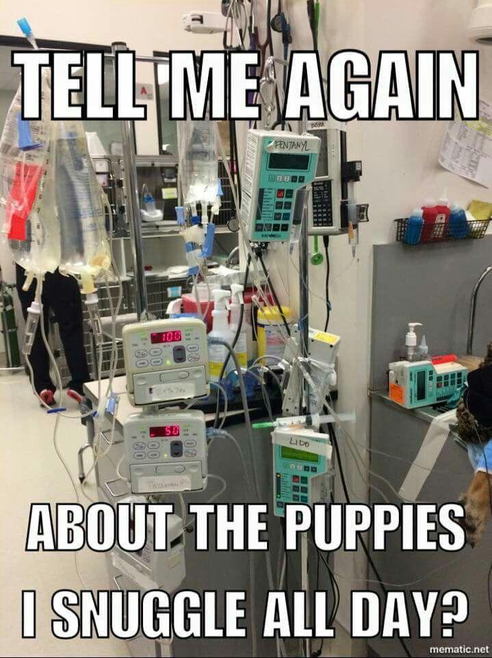 Vet Tech Student Image By Kristen Zalud On Veterinary Med Vet