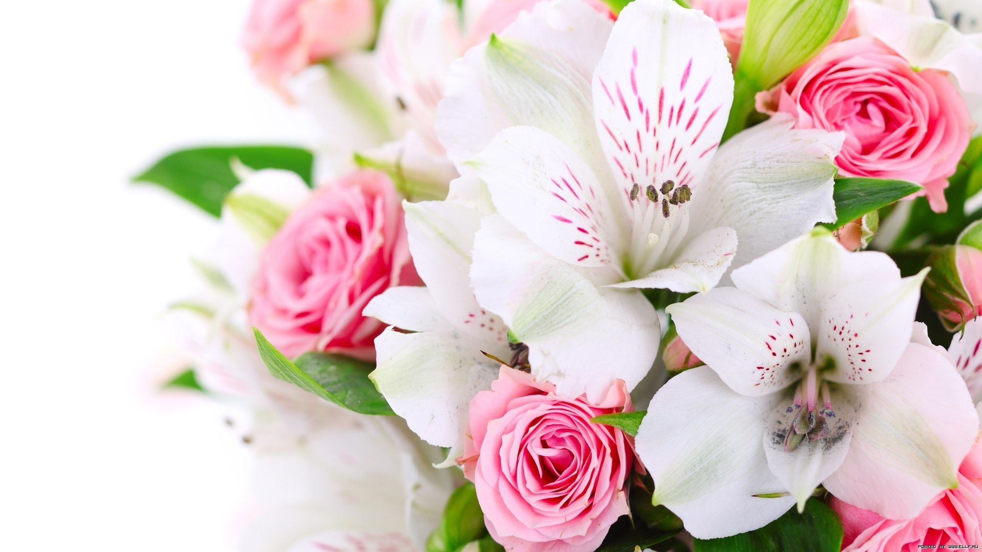 Beautiful Flowers Bouquet Images: Beautiful Flowers - Google Search
