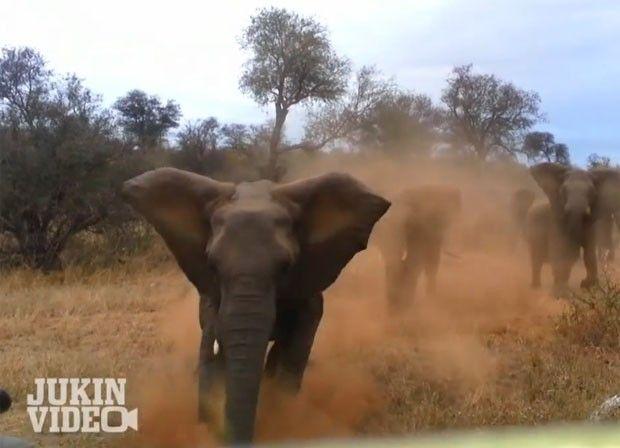 Elefanta atacou jipe no parque nacional Kruger (Foto: Reprodução/YouTube/JukinVideoDotCom)