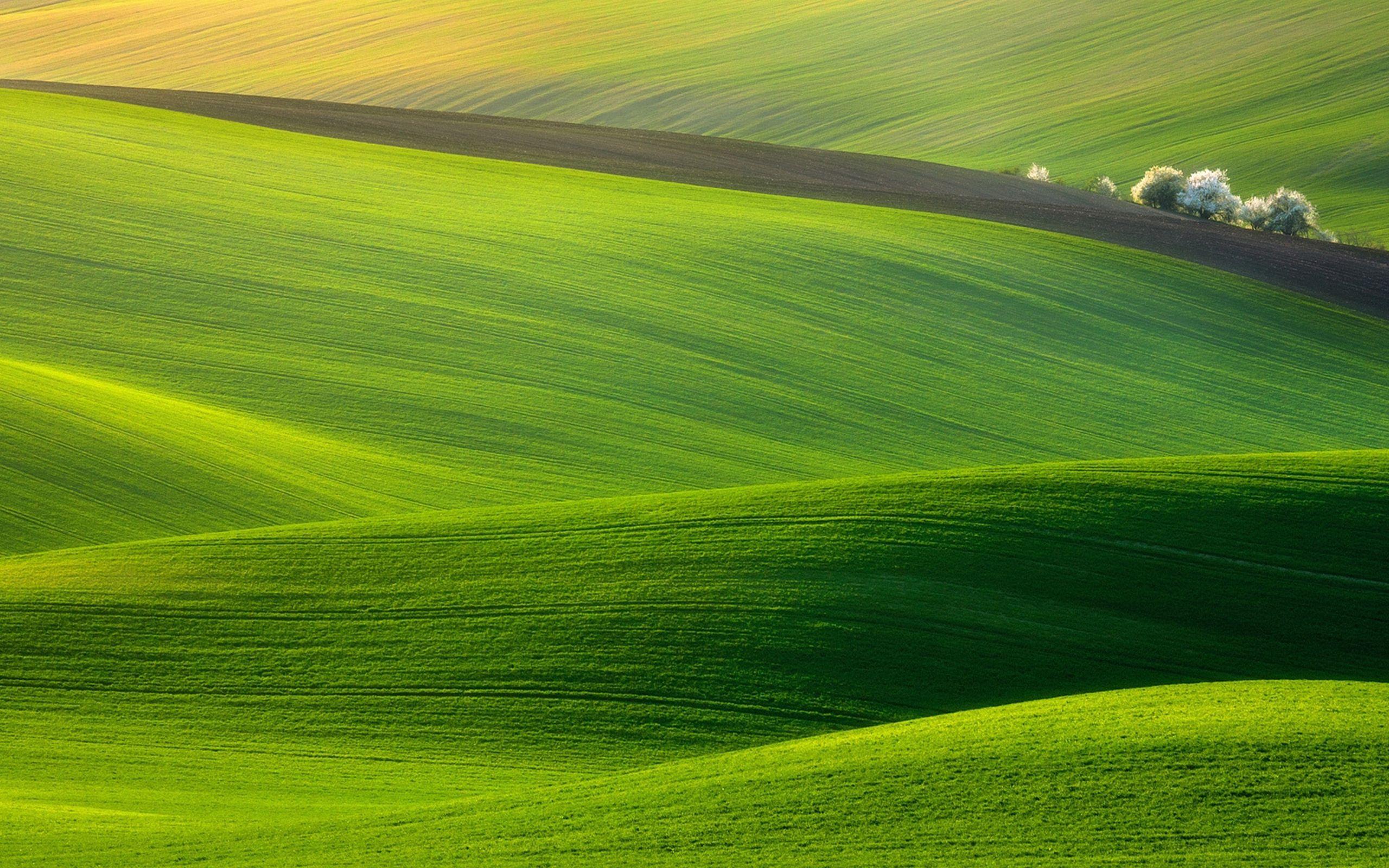 Resultado de imagem para green hillside