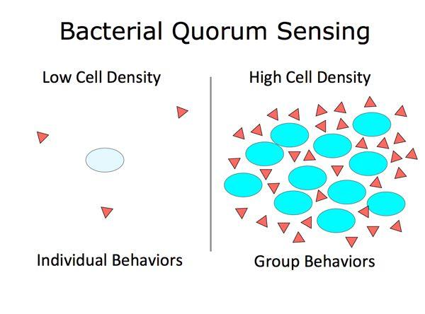 Bacterial Quorum Sensing Everything Is Energy Senses Biology