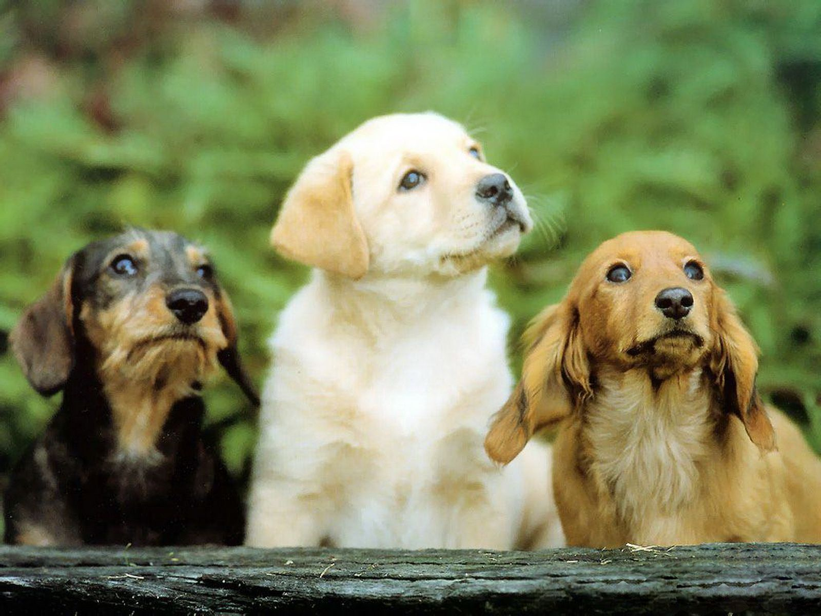 Cute Dog Family