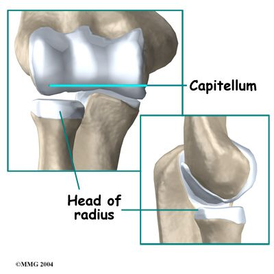 Humero Radial Joint A Joint Between Capitulum Of The Humerus And Head Of Radius Pivot Joint Of Synovial Huesos Anatomia Anatomía Articulacion