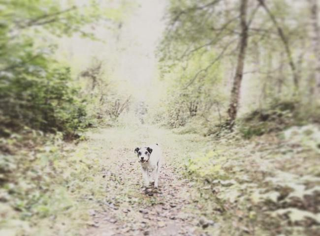 der weisse hund  DOG BLOG  Mein Hund ein Freund auf Zeit Oder wenn der Welp der weisse hund  DOG BLOG  Mein Hund ein Freund auf Zeit Oder wenn der Welpe ganz plötzli...