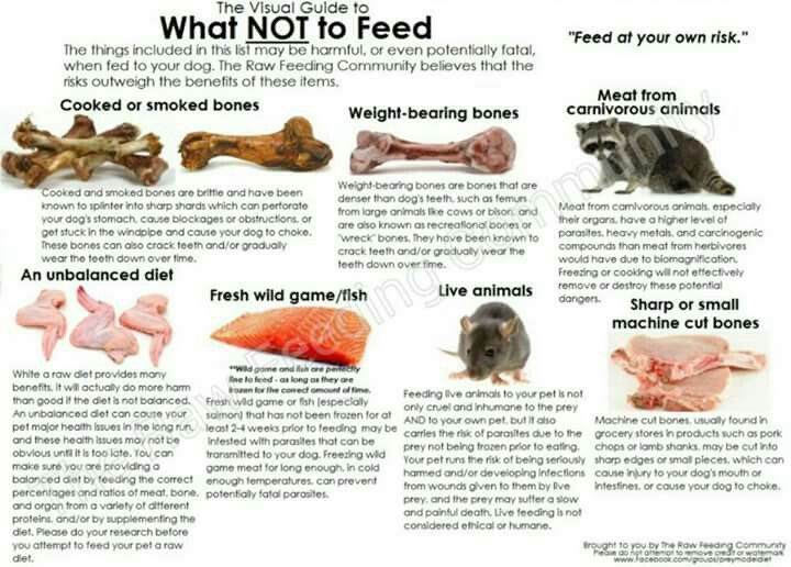 raw food diet for ferrets