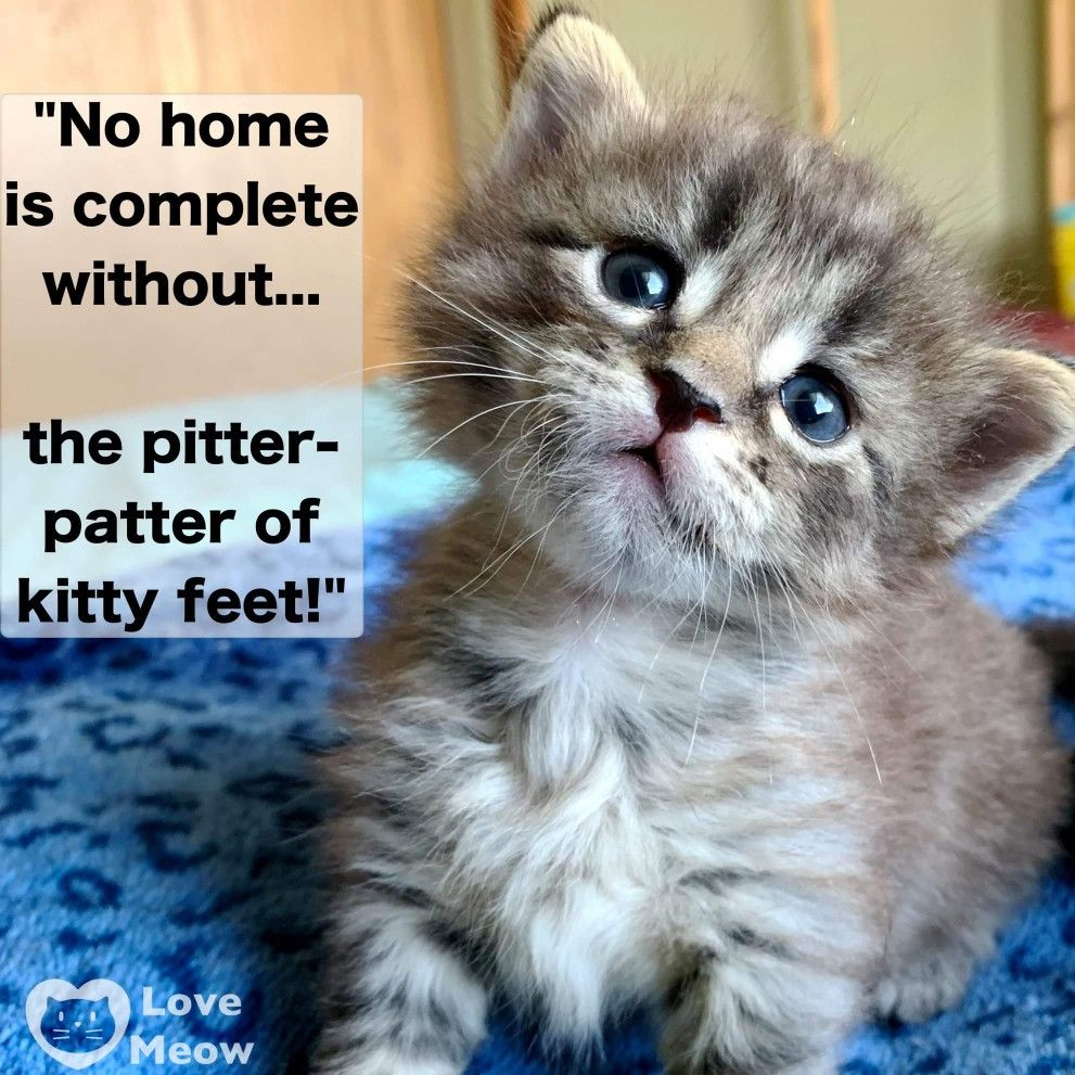 Pin By Erika Ezzi On Cat Purrs Cat Purr Kittens Cutest Kitty