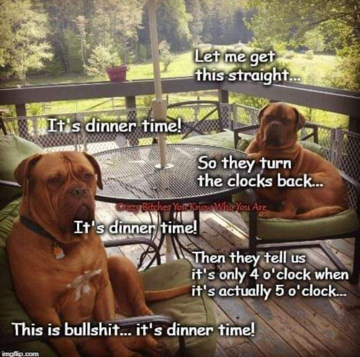 Pin by bill w on boxers boxer dogs funny dog memes