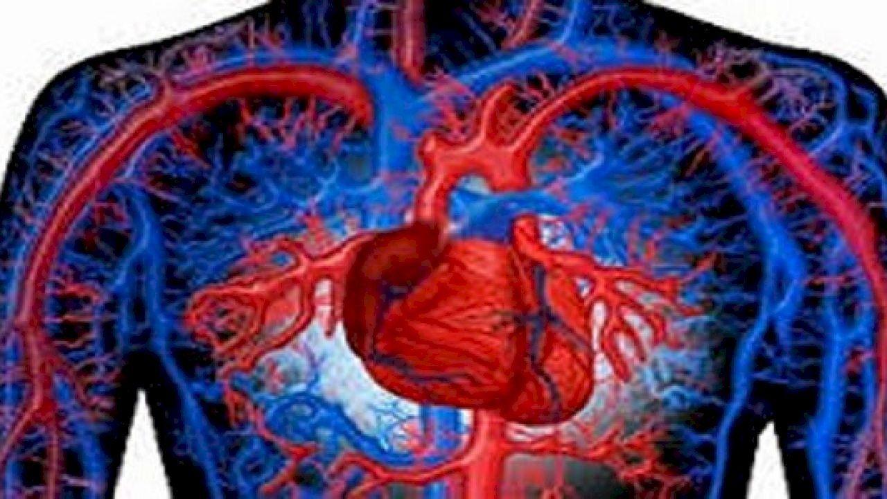 ما هي أهمية دوران الدم في الجسم Circulatory System Medical Knowledge Circle Of Life