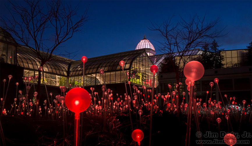 Bruce Munro Light Exhibit This Is The Last Week In Columbus Ohio