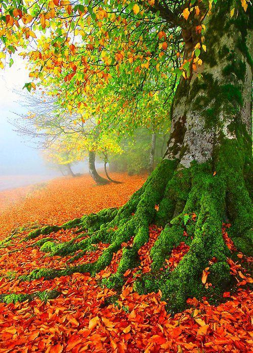 En otoño. Nature