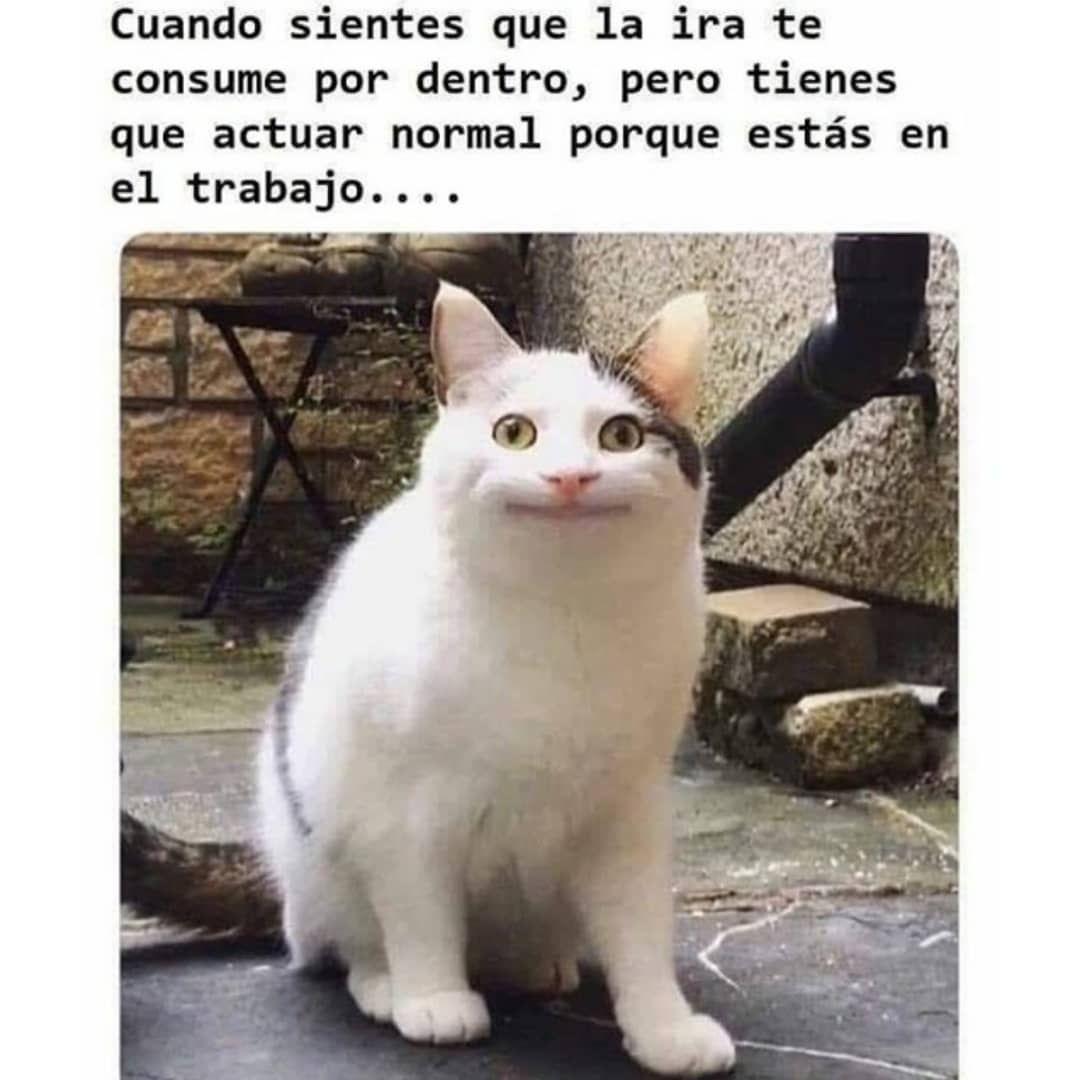 Pin De Claudia Buruchaga En Memes Random Muy Divertidos Graciosos Para Ti Memes De Animales Divertidos Memes Divertidos Memes