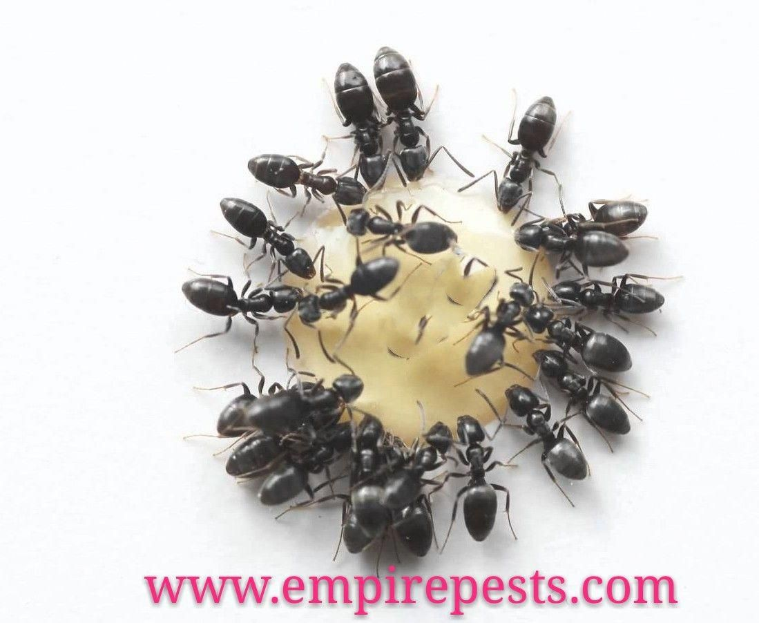 Looking for emergency pest control service in canada call