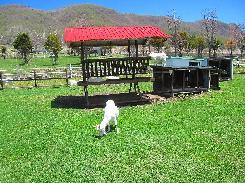 鷹山ファミリー牧場 - Google検索   牧場