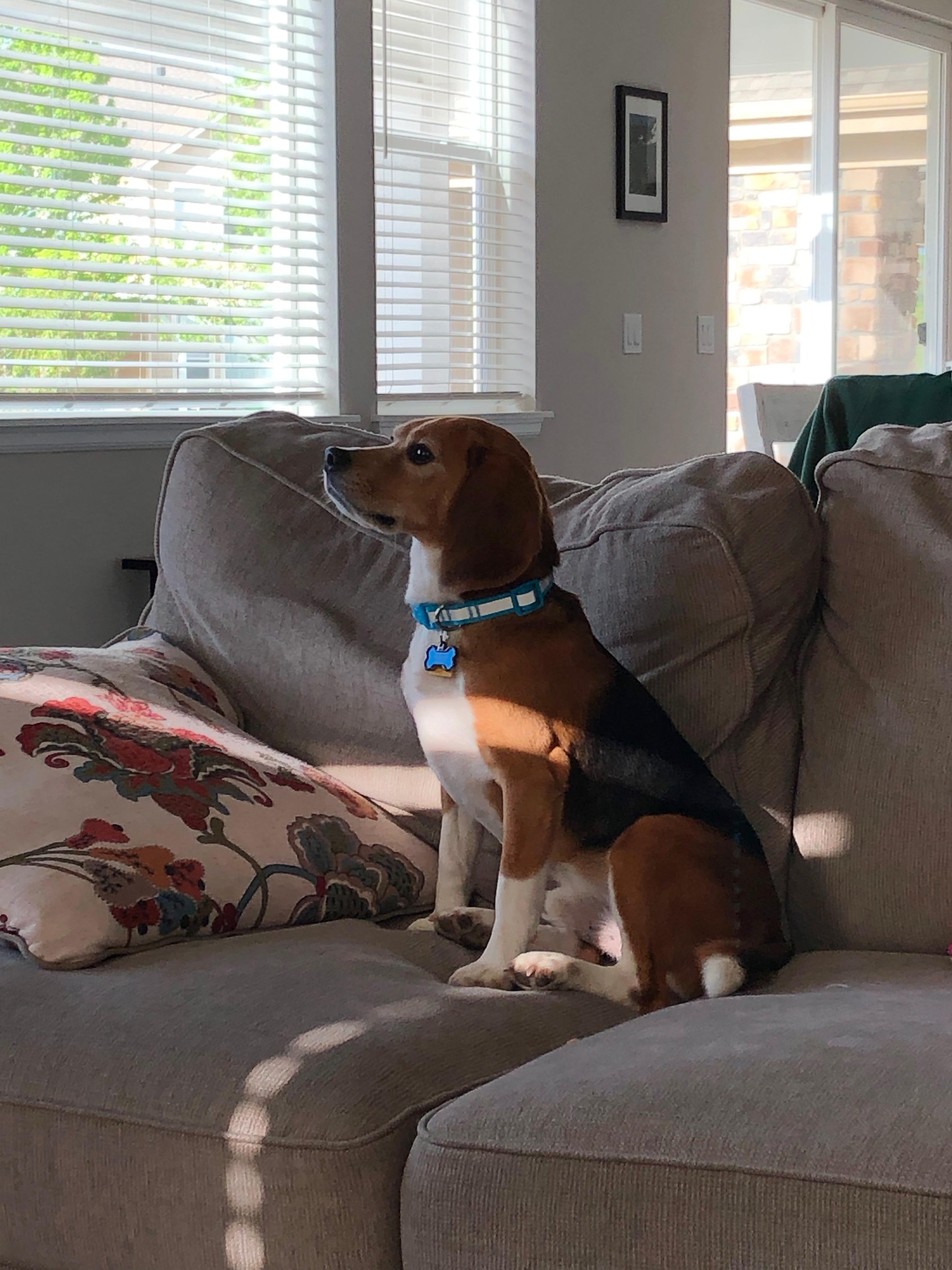 Pin By Rickey Smith On Beagles Beagle Dogs Adoption
