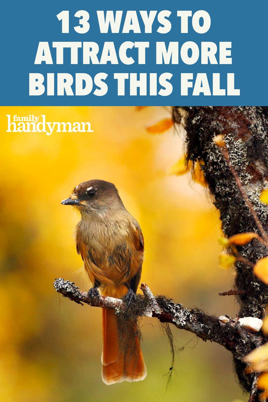 Fall Backyard Birding Checklist 13 Tips To Attract More Birds To Your Yard This Autumn In 2020 Fall Backyard Birds Backyard