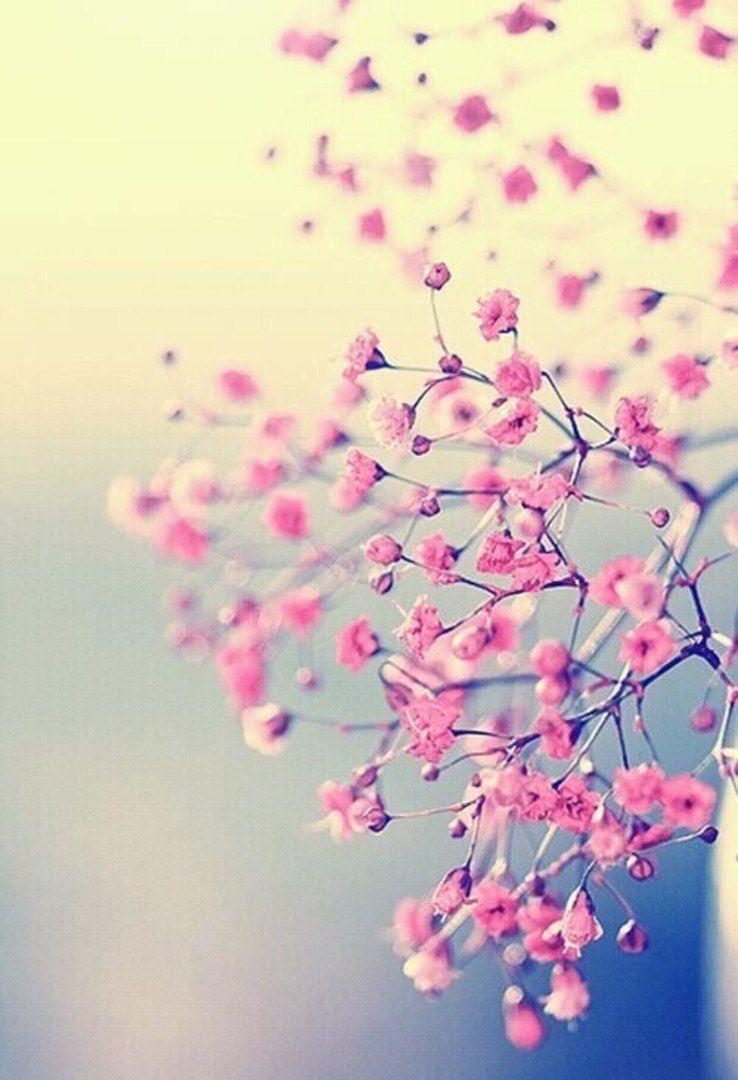 Обои для айфон картинки на телефон андроид фоны | Цветки ...