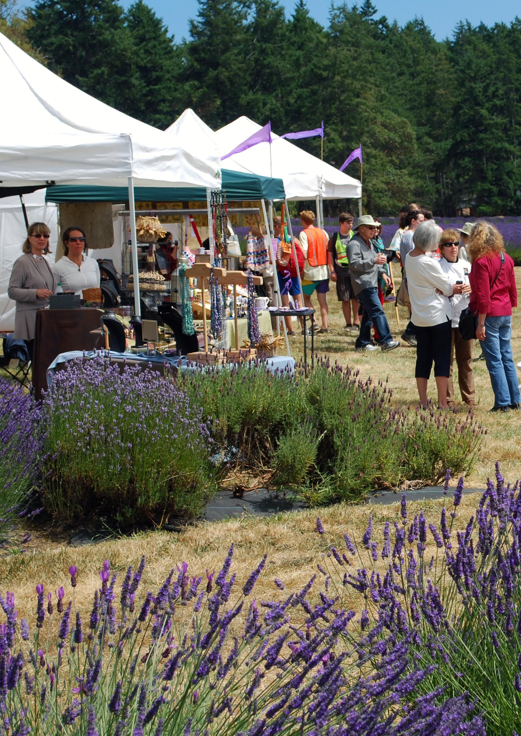 Lots of local, San Juan Island artists participate in the lavender