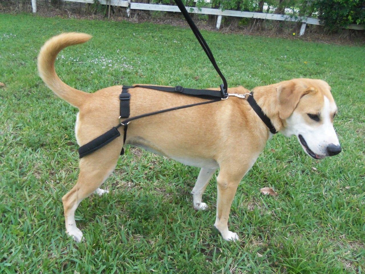 Horgan Harness Pet Harnesses Pet Supplies Australian Shepherd