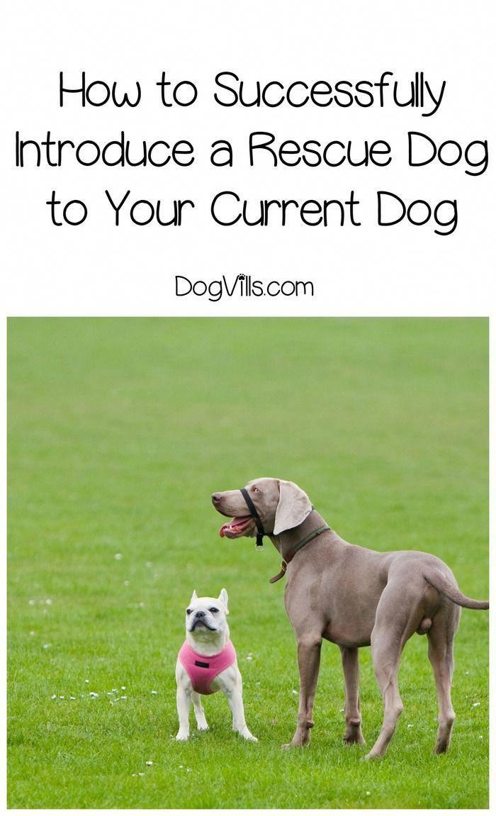 Discover The Active Boxer Puppies Size Boxerdogsofinstagram