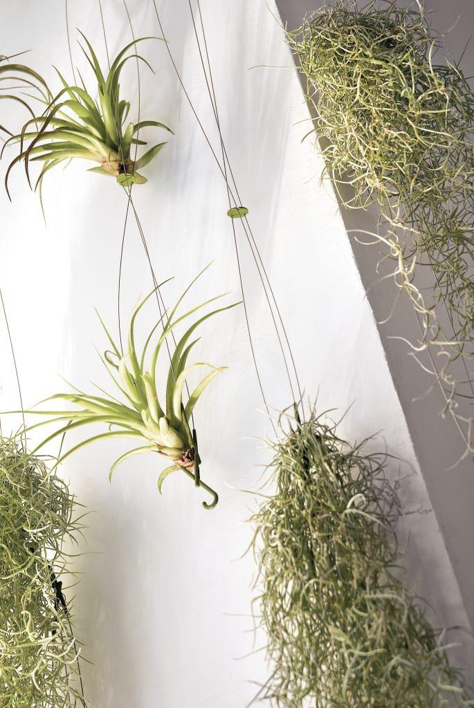 De style par homify, minimaliste #sichtschutzpflanzen