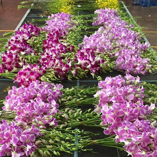 We Wish You A Really Great Day Orchids Flower Thaiorchids Thaiorchidsexpoter Thailand Plant Beautiful Orchids Flowers Plants