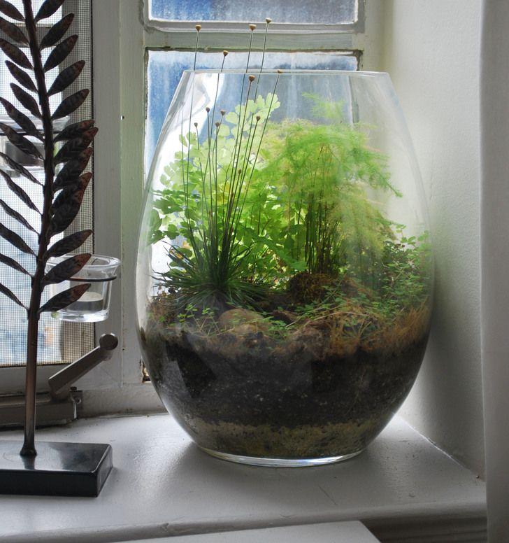 The Windowsill Terrarium   Developing Nicely!   Album On Imgur
