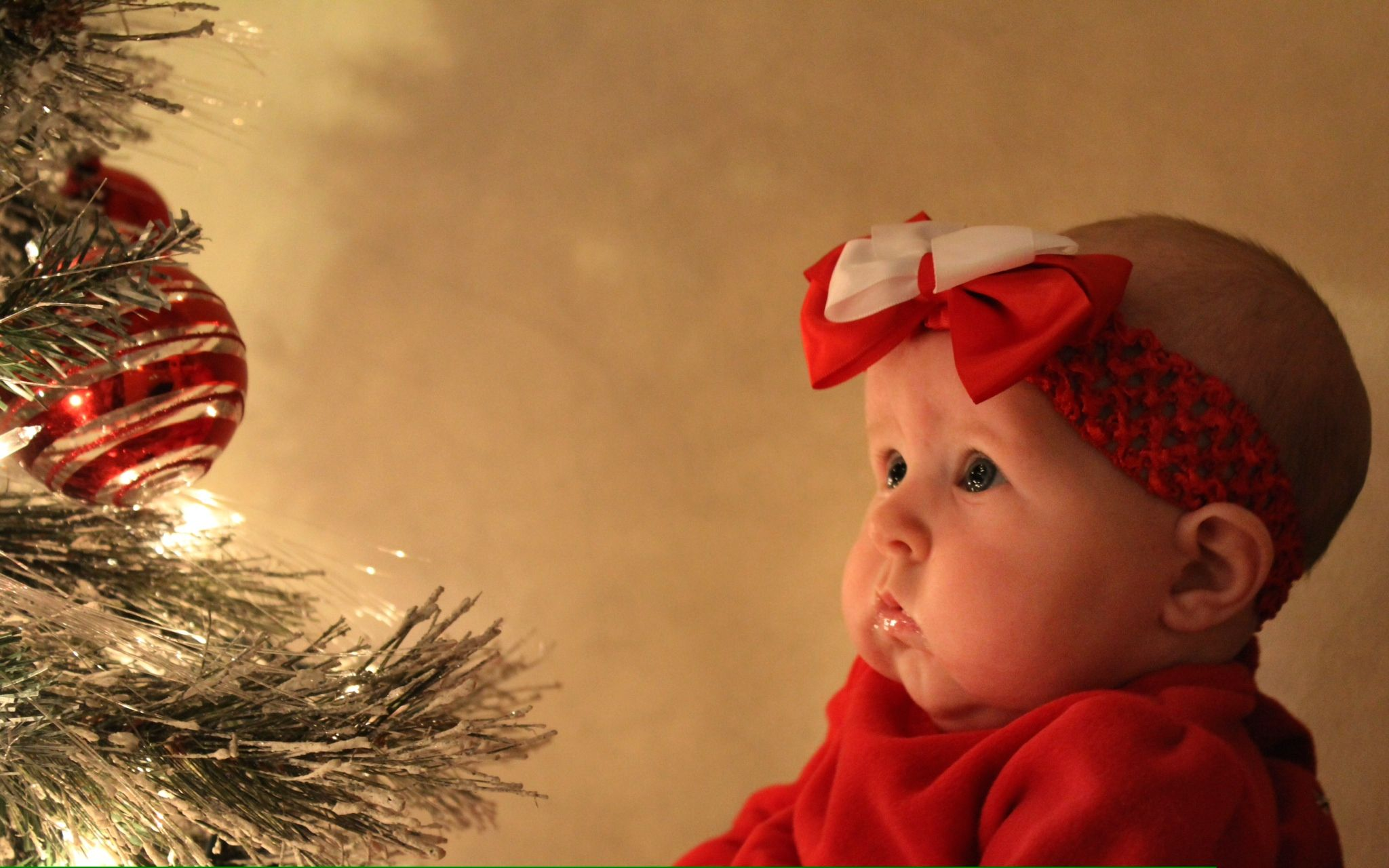 Mollys 3 Month Old Christmas Pictures