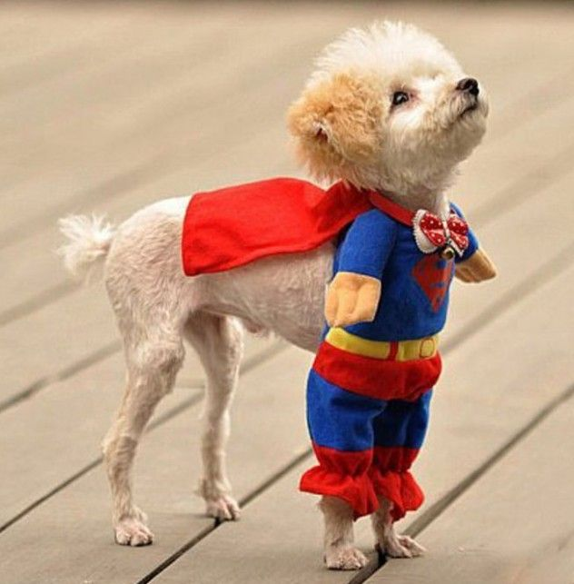 Superpooch!  I really might have to do this with Jasmine.  I love it!!!