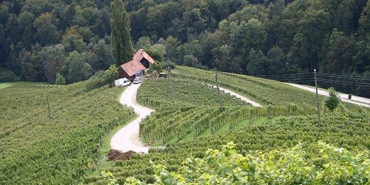 Vineyard, Slovenia
