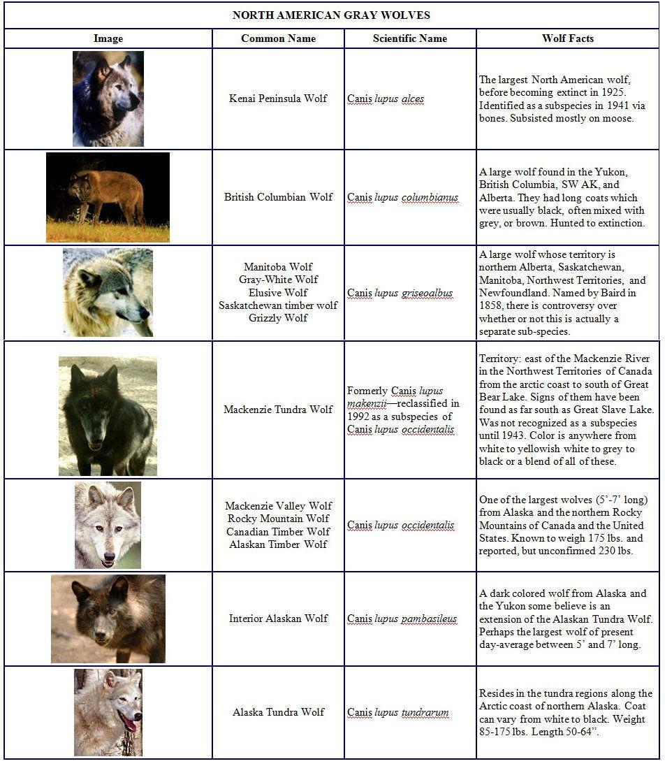 Wolf Subspecies | Wolf | Pinterest