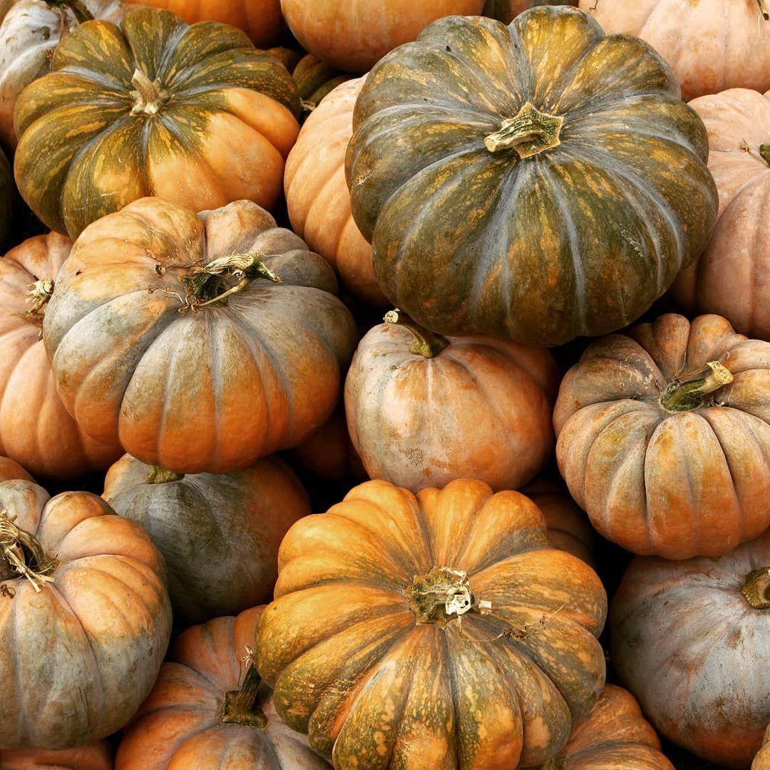 Ktore Dynie Sa Najlepsze Which Pumpkins Are The Best Pumpkin Vegetables