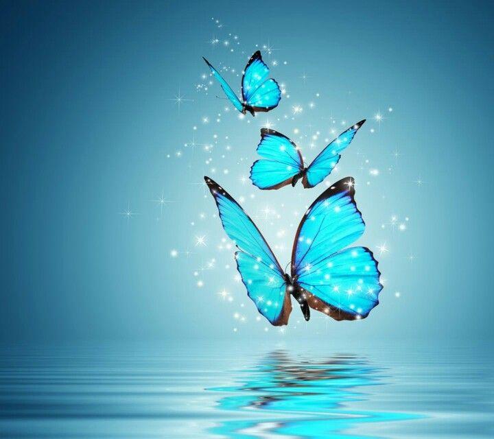 Magical Butterflies!