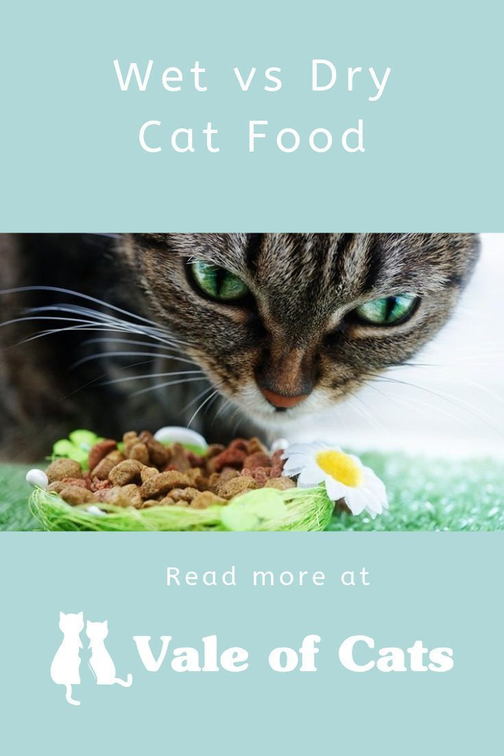How Much Wet Food to Feed a Kitten Per Day? Dry cat food