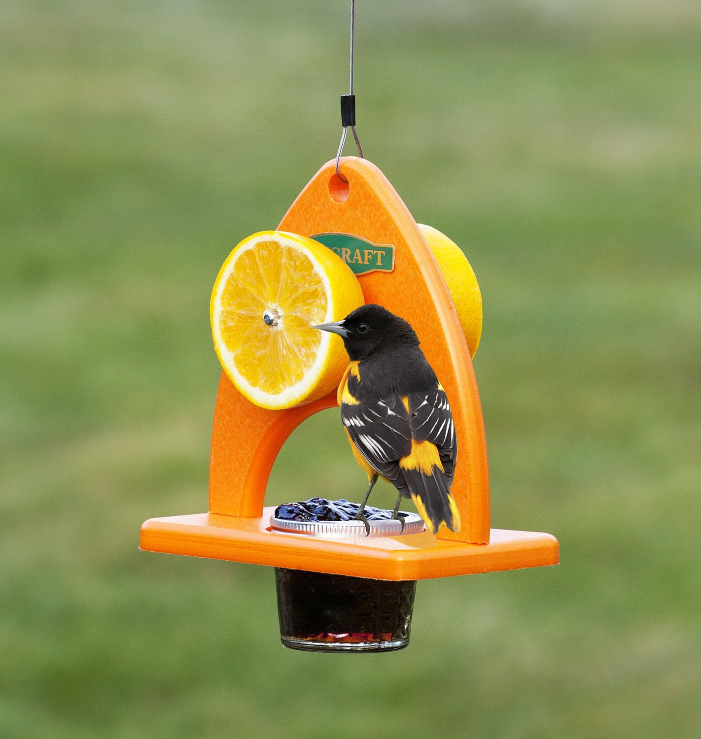 oriole delight feeder the curvaceous design of this bird feeder