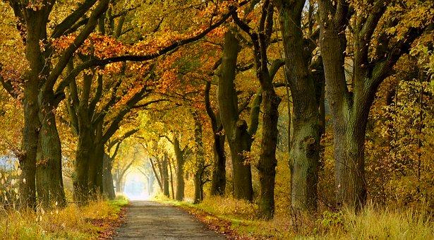 Gratis Billede Pa Pixabay Avenue Baumreihe Traeer Vaek Landskab Billeder Natur