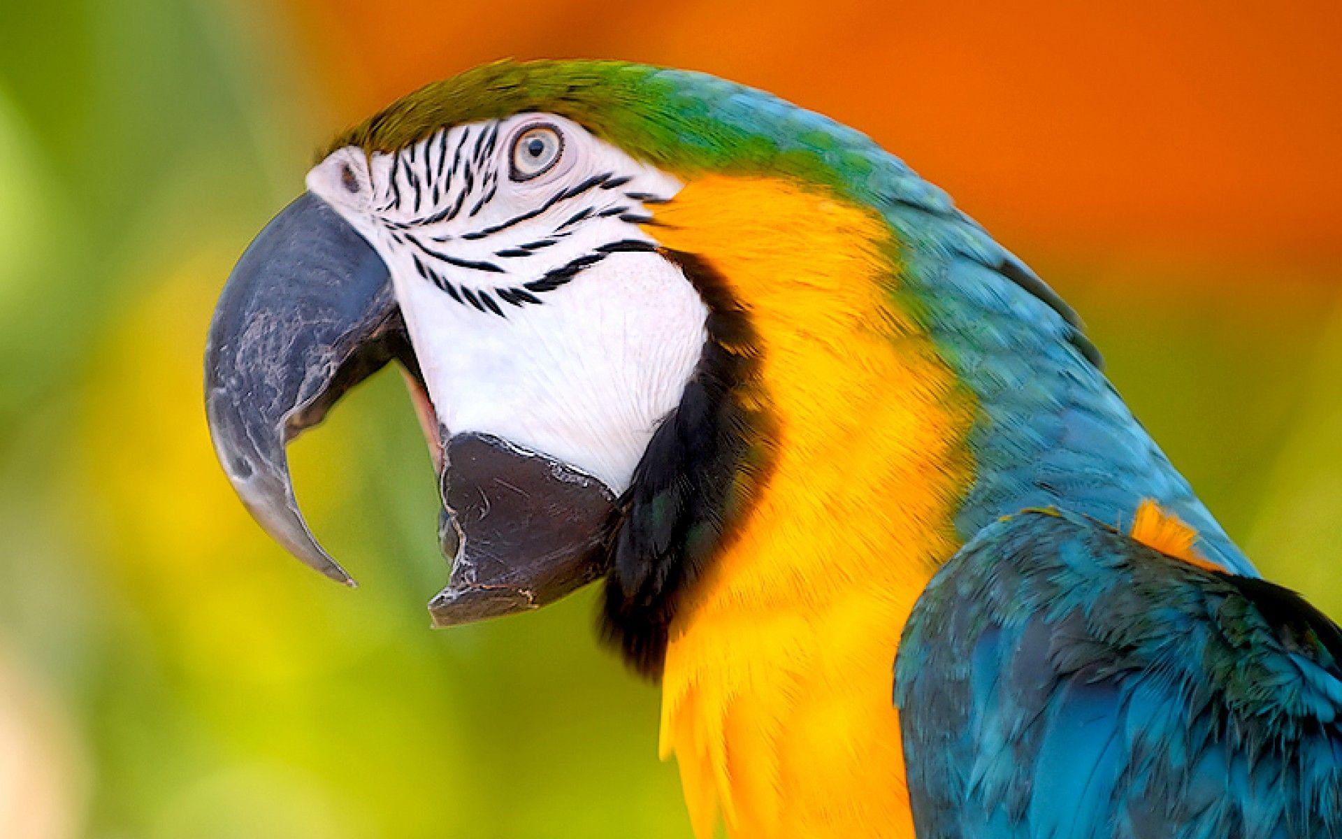 Parrot Wallpapers Wallpaper Wallpapers For Desktop