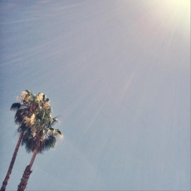 blue skies + palm trees