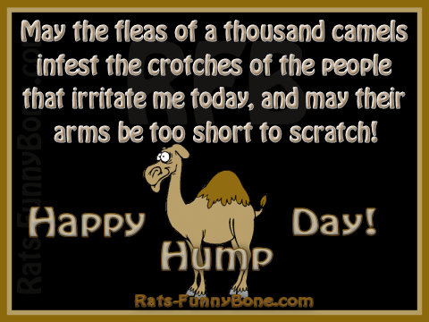 Geico Quotes Humpdaycamel  Happy Hump Day Camel Rats Funnybone Com Geico Hump .