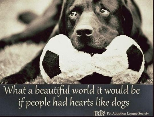 26 Dog Quotes About Love And Compassion With Images Dog Quotes