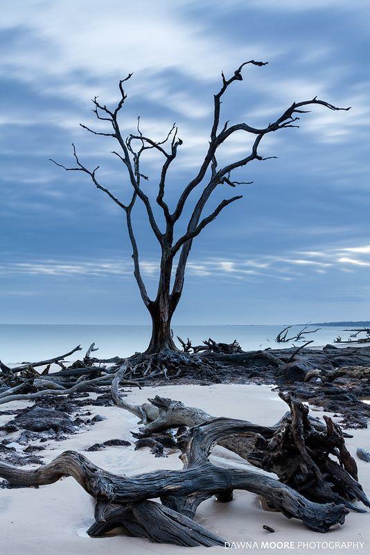 The Sentinel Blackrock Beach Talbot Island Florida
