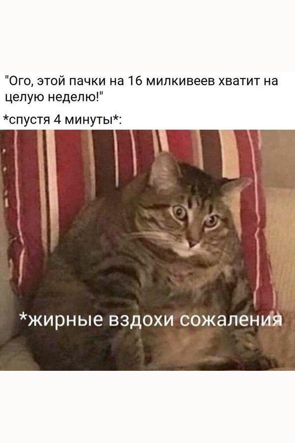 Рецепты   Vk в 2020 г   Мемы животные, Утренний юмор, Мемы
