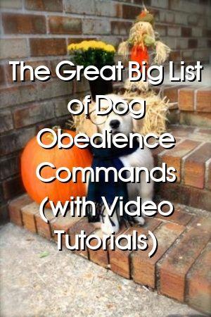 Madeleine Berry Tells About The Great Big List of Dog Obedience Commands (with Video Tutorials) #dogsdiys#dogsandbabies#cutedogs#dogdiystuff#dog#petideas#diypet#petstuff