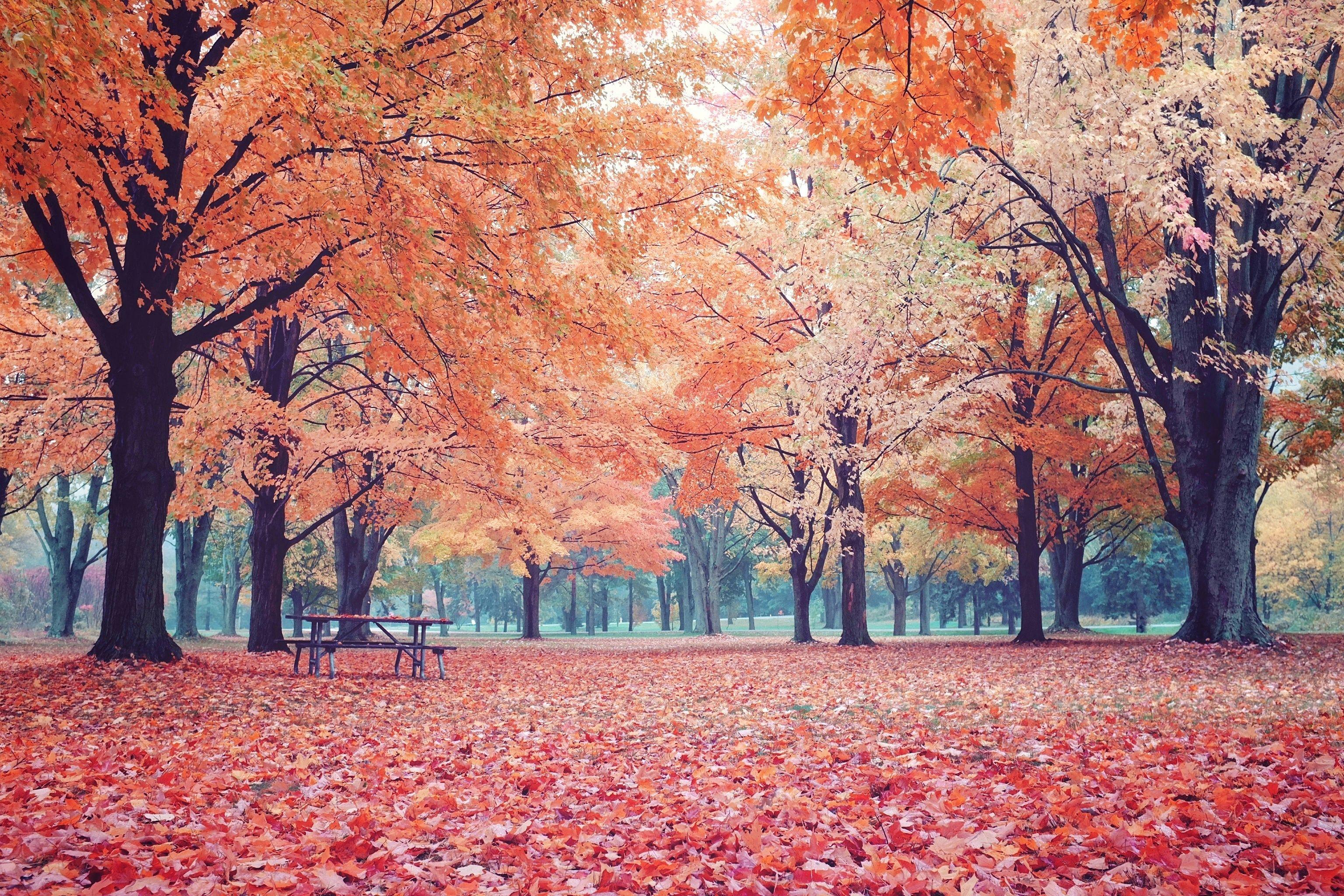 Top Wallpaper Mac Autumn - 7f455f9cc9f4c3678252db455763db04  Snapshot_1001865.jpg