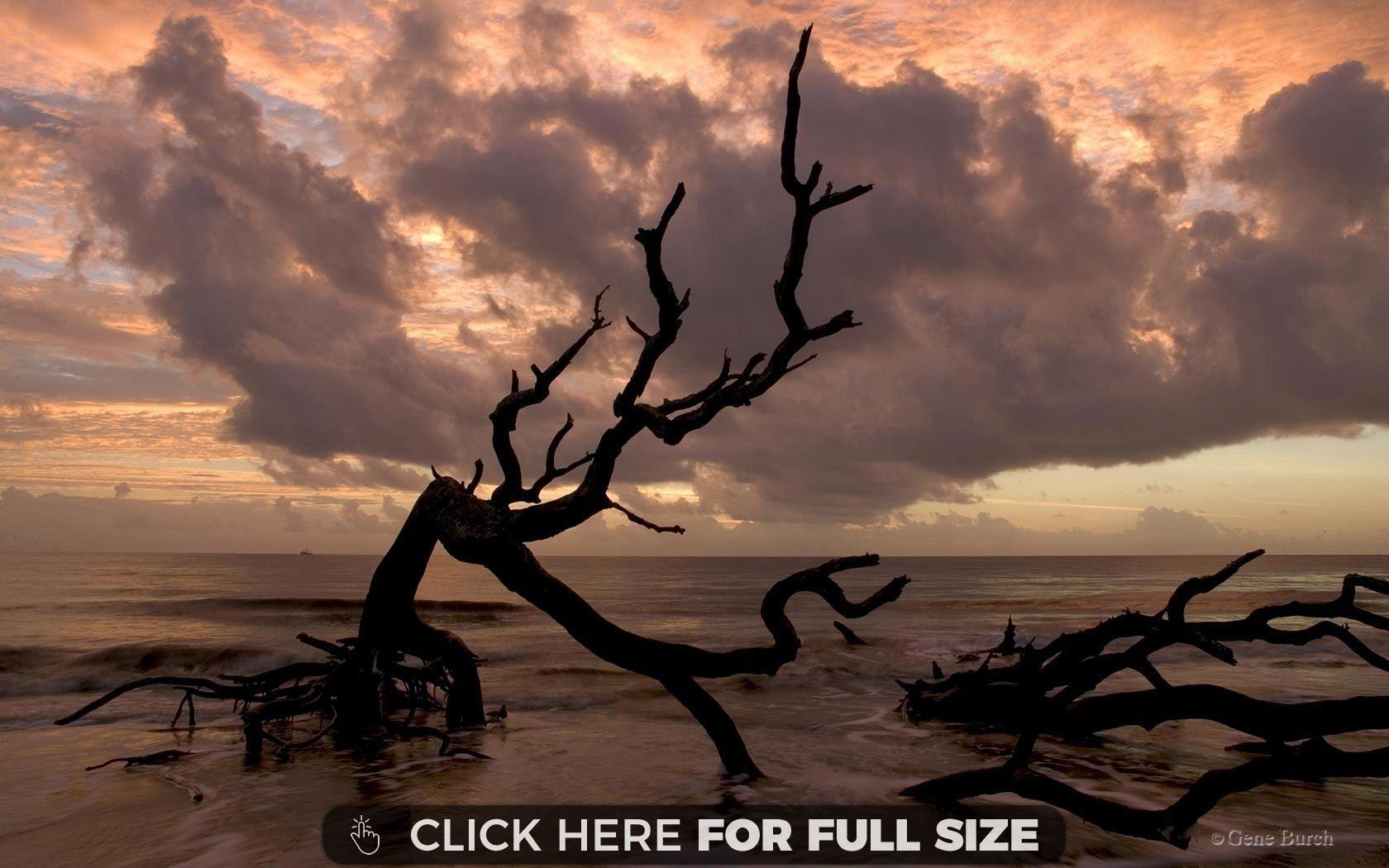 Dead Trees on Beach Nature wallpaper, Beach wallpaper