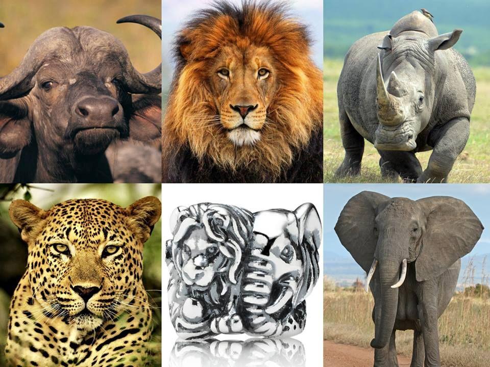 Charm pandora safari big five argent 925 1000e 791360 le - Animaux savane africaine ...
