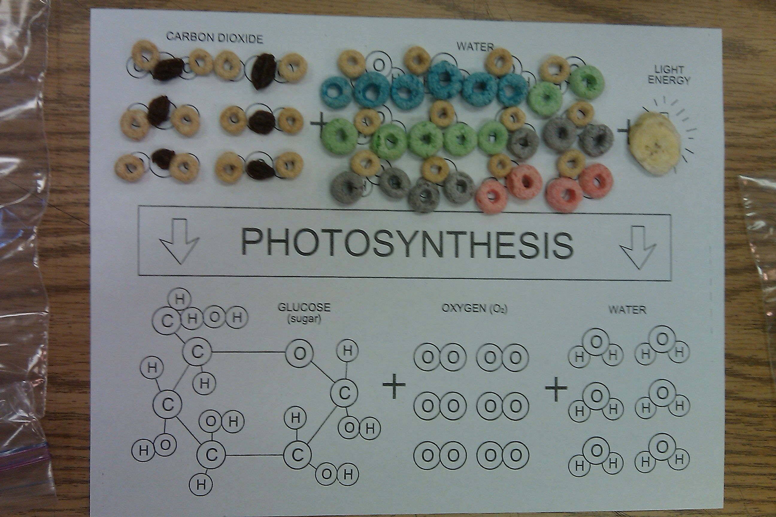 Photosynthesis formula game the kids used a spinner to