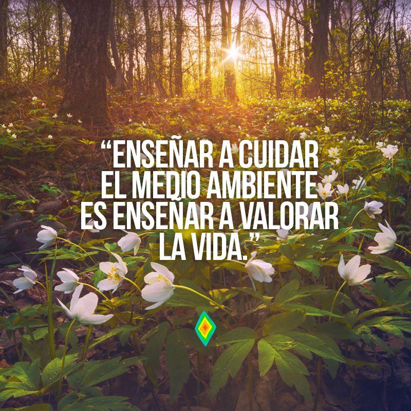 Ense ar a cuidar el medio ambiente es ense ar a valorar la for Cancion el jardin de la alegria